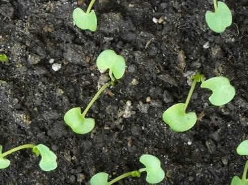 Как вырастить глоксинии от Florium.ua
