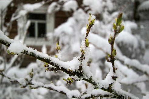 Гидрометцентр: Из-за заморозков погибло 30% урожая плодовых