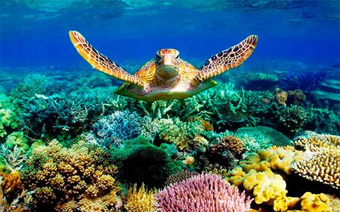 Наибольший живой организм Земли оценили в $42 млрд