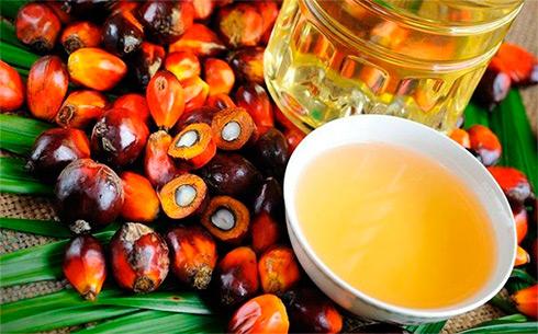 Рада одобрила введение запрета наиспользование пальмового масла